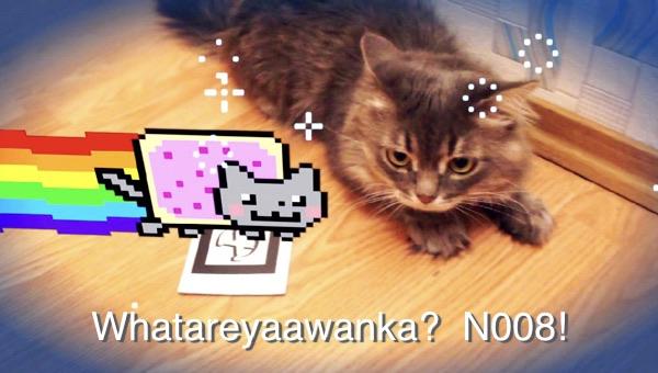 Cat-AR.jpg