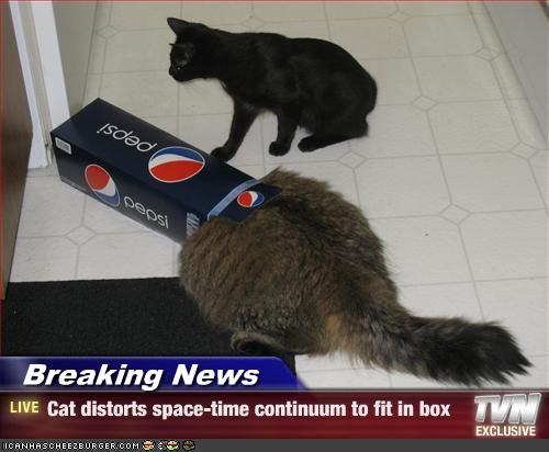 BN-cat.jpg