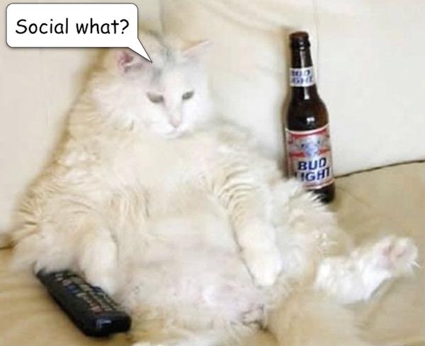 Cat-Bud.jpg