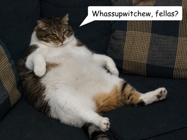 sitting-cat.jpg