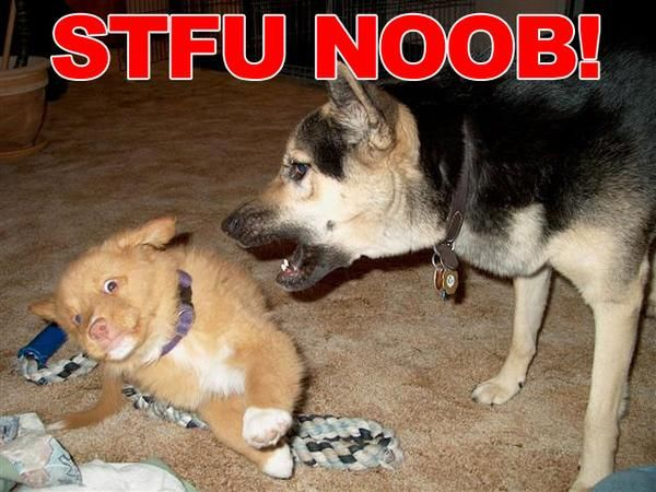 STFU-NOOB.jpeg